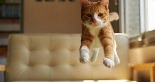 El misterio de por qué los gatos caen siempre de pie