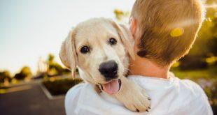 Consejos para cuidar a tu perro durante la cuarentena