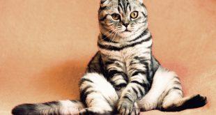 Lo que debes saber cuando tu gato se hace mayor