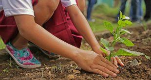 Acciones para cuidar el medioambiente desde casa