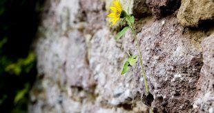Resiliencia: un camino por seguir en la nueva cotidianidad