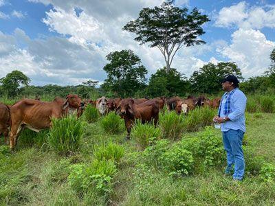 En el Día Nacional del Ganadero, Gobierno del Cesar reitera su apoyo a los productores del sector