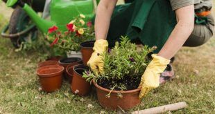 Los beneficios de la jardinería casera